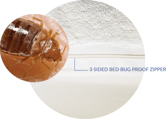 3-Sided Bed Bug Proof Zipper